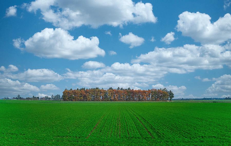 21世紀枠帯広農業高校について