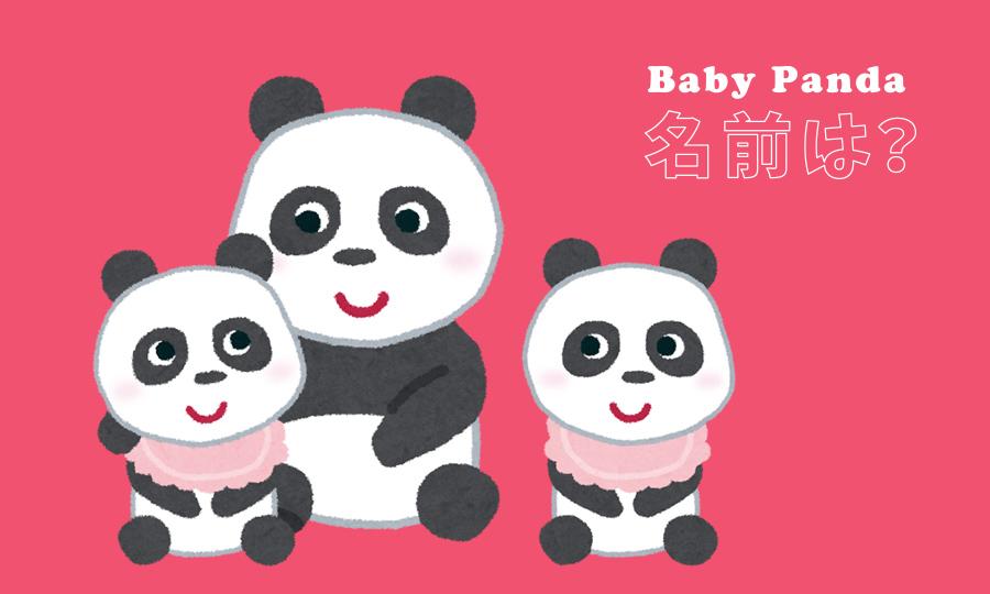 シンシンの赤ちゃんパンダの名前は?