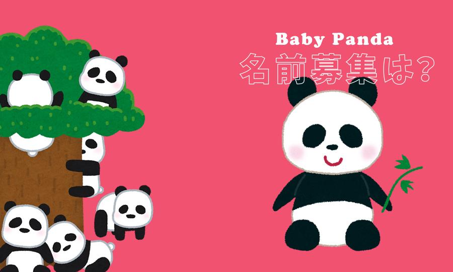 シンシンの赤ちゃんパンダの名前募集はいつ?