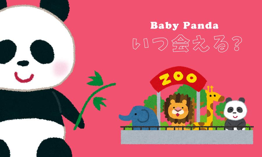 赤ちゃんパンダ双子ちゃんはいつ見れる?