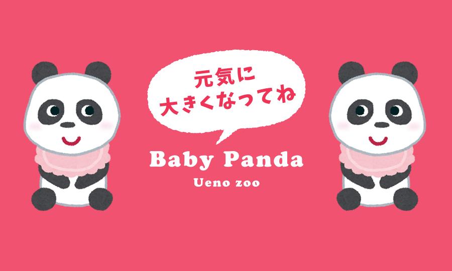 2021上野動物園シンシンの赤ちゃんまとめ