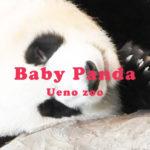 【2021上野動物園】赤ちゃんパンダの名前いつ決まる?【シンシンの双子】