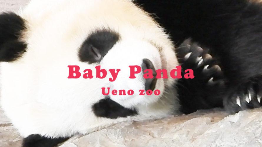 【2021上野動物園パンダ】シンシンの赤ちゃん名前は?募集はいつ?【双子】